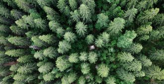 Hakkarainen EU:n biodiversiteettistrategiasta: Jäsenmaiden suvereniteetista metsäpolitiikassa ei tule luopua