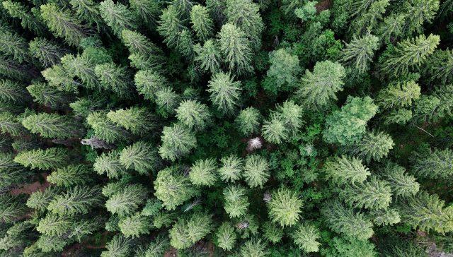 Teuvo Hakkarainen:n biodiversiteettistrategiasta: Jäsenmaiden suvereniteetista metsäpolitiikassa ei tule luopua...