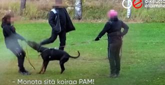 Perussuomalaiset kansanedustajat: Suojelukoirien väkivaltainen koulutus ja muu eläinrääkkäys on saatava kuriin